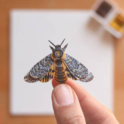African death head Hawkmoth