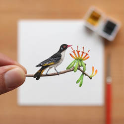 The painted Honeyeater