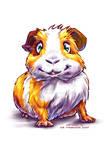 Guinea-Pig 1