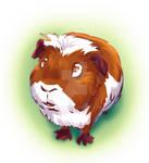 Too Curious Guinea Pig
