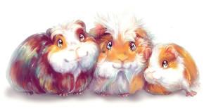 My Little Guinea Pigs