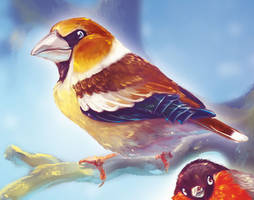 Hawfinch - detail by Fany001