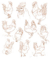 The Coolest Rooster Sketches by Fany001