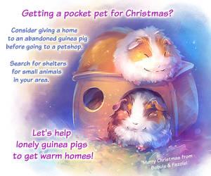 Guinea Pigs Adoption Awareness