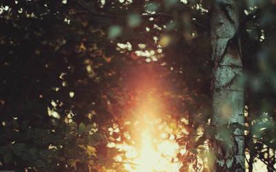 Light by Zim2687