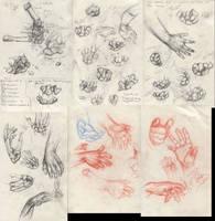 Carpal Studies by Aranthulas