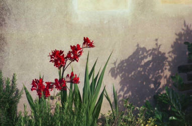 Red flowers III by Nigel-Kell