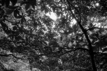 Looking up by Nigel-Kell