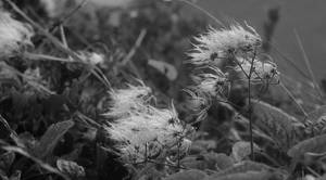 Windswept by Nigel-Kell