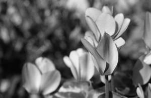 Fairy flowers II by Nigel-Kell