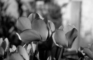Fairy flowers III by Nigel-Kell