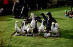Goose patrol