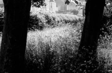 Urban meadow II by Nigel-Kell