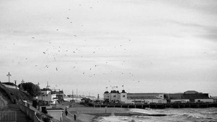 Gulls over the pier by Nigel-Kell