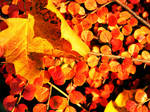 autumn .