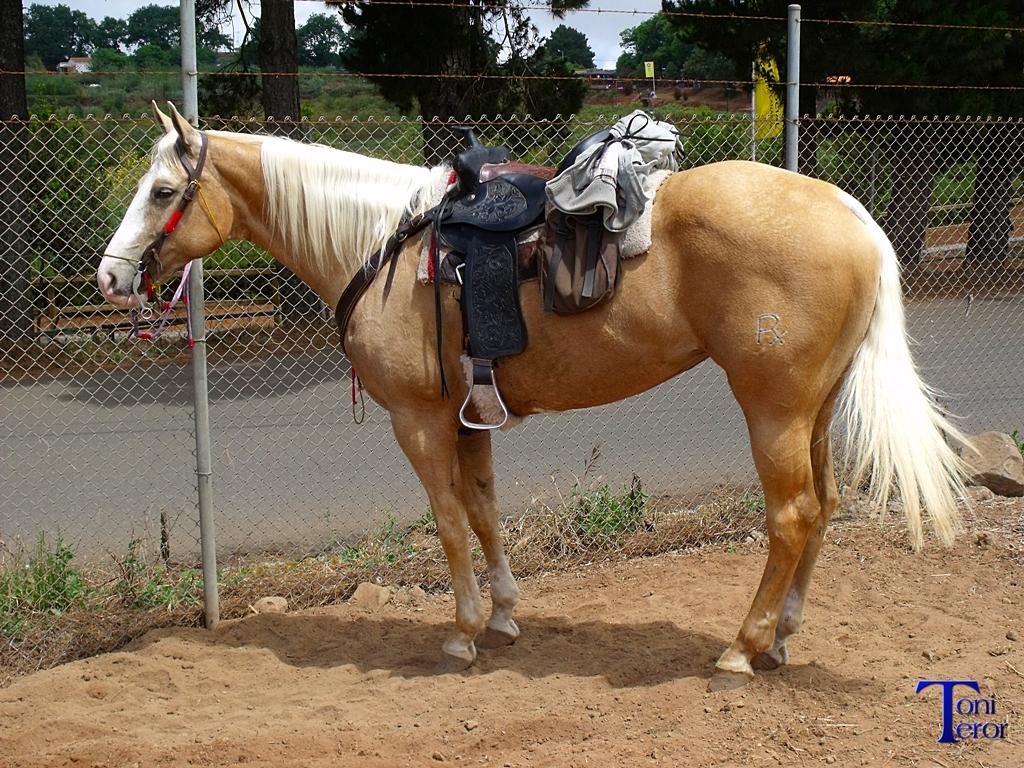 caballo con montura 2 by toniteror on deviantart