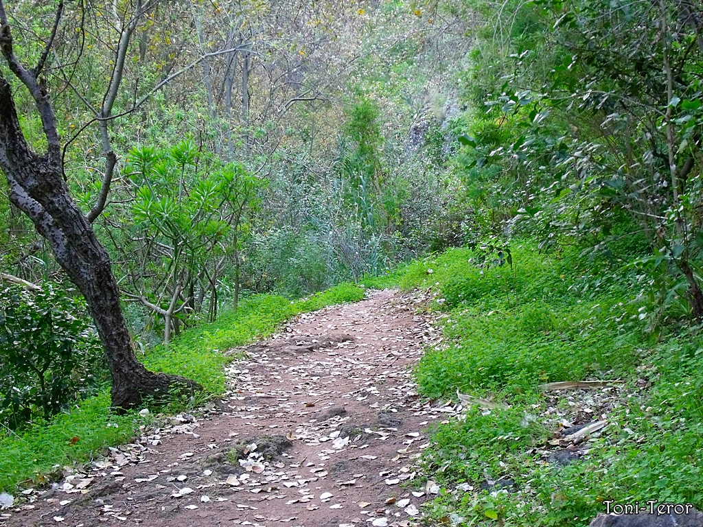 Hojas secas en el camino by ToniTeror