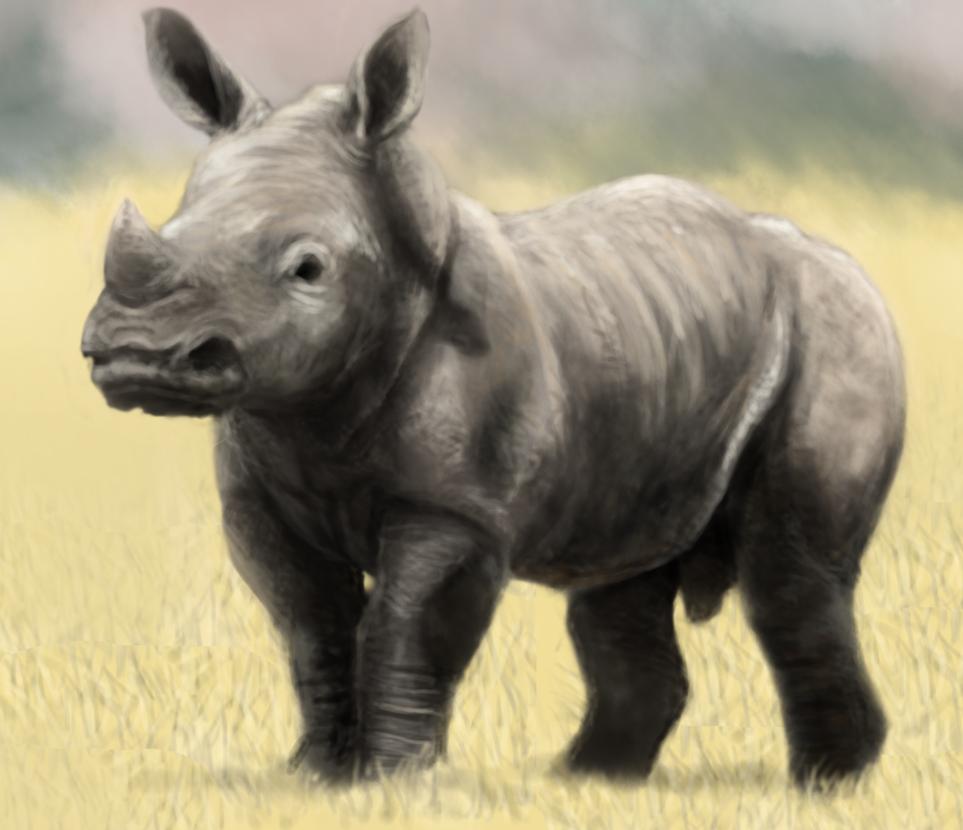 Baby Rhinoceros Baby rhino by petey-chanRhinoceros Baby