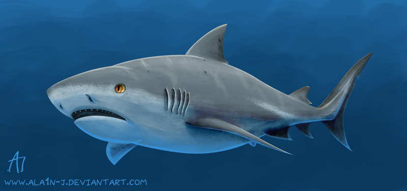 how to draw a realistic bull shark
