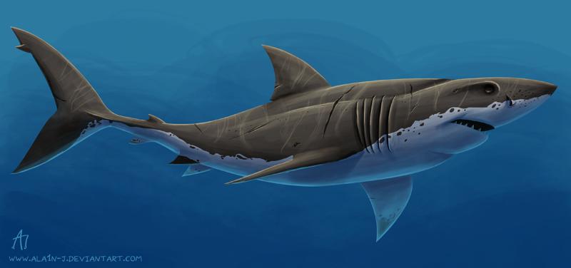 Great White Shark Painting | www.pixshark.com - Images ...  Great White Shark Painting