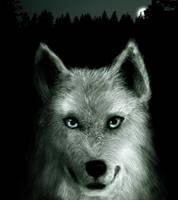 Werewolf by MikeZK