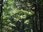 Living Woods by MikeZK
