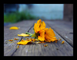 Broken Flower by PaperMachete
