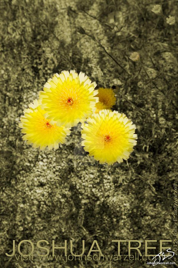 JOSHUA TREE FLOWERS 02 by exopix