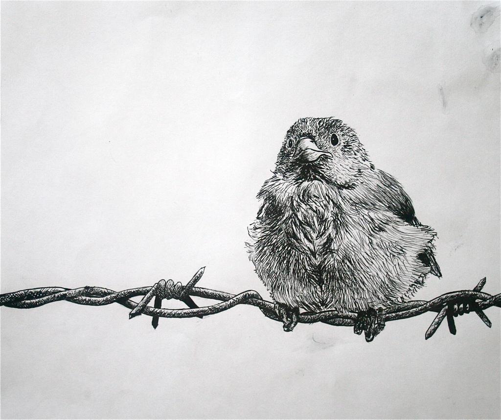 Bird on Wire by darlingnikki12 on DeviantArt