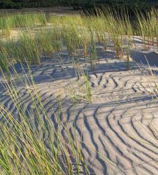Dune Grass 2 by Rhizelle