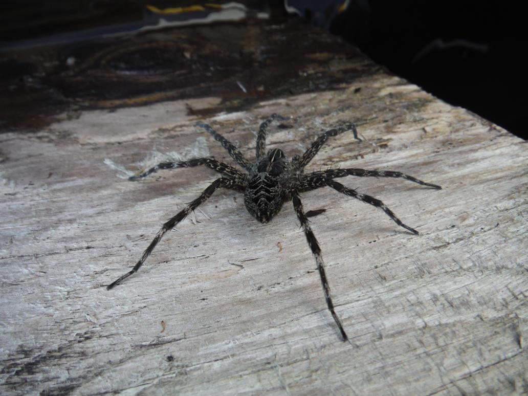 Creepy Crawlies by GlitchTheCon