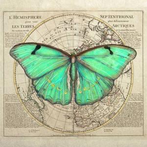 GreenBfly2C