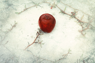 pin snow white apple wallpaper green wallpapers 7281