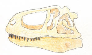 Quick Sketch: Abelisaurus skull by Qianzhousaurus