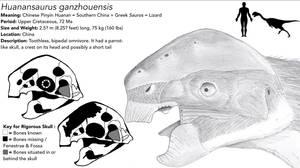 Huanansaurus ganzhouensis by Qianzhousaurus