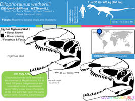 Dilophosaurus wetherilli skull skeletal by Qianzhousaurus