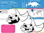 Triceratops horridus skull skeletal