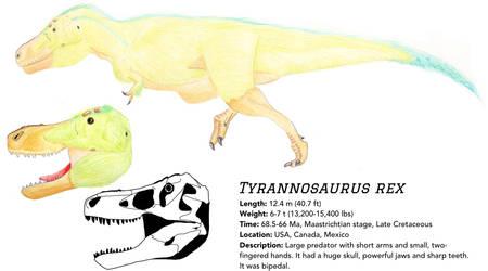 Field Guide: Tyrannosaurus rex by Qianzhousaurus