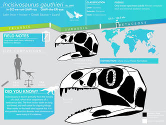 Incisivosaurus gauthieri skeletal infographic by Qianzhousaurus