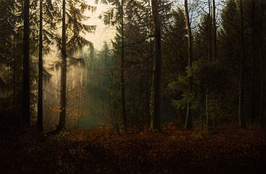 Autumnal Dawn in the Forest by MHandt