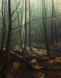 Rime on Fallen Leaves