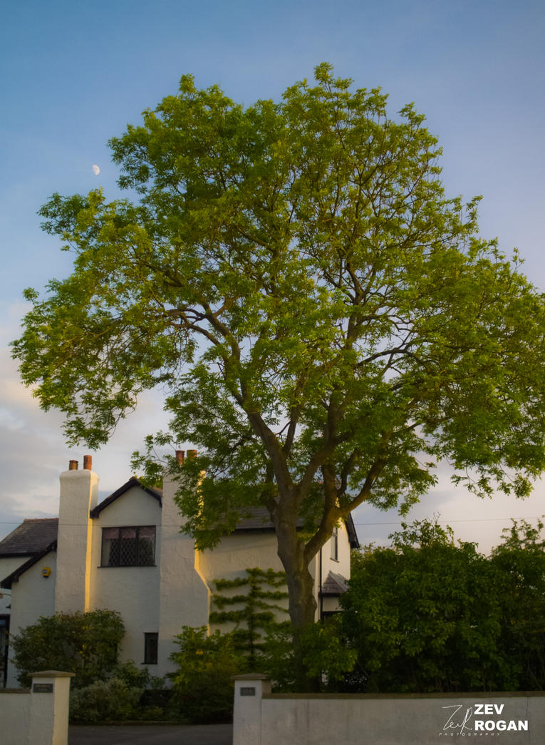 RE-TWEAKED SERIES: The Tree by ZEVLEVIROGAN
