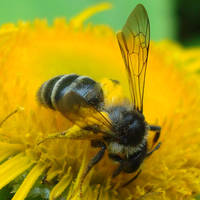 The Bee vs. The Flower by Alexandru-MM