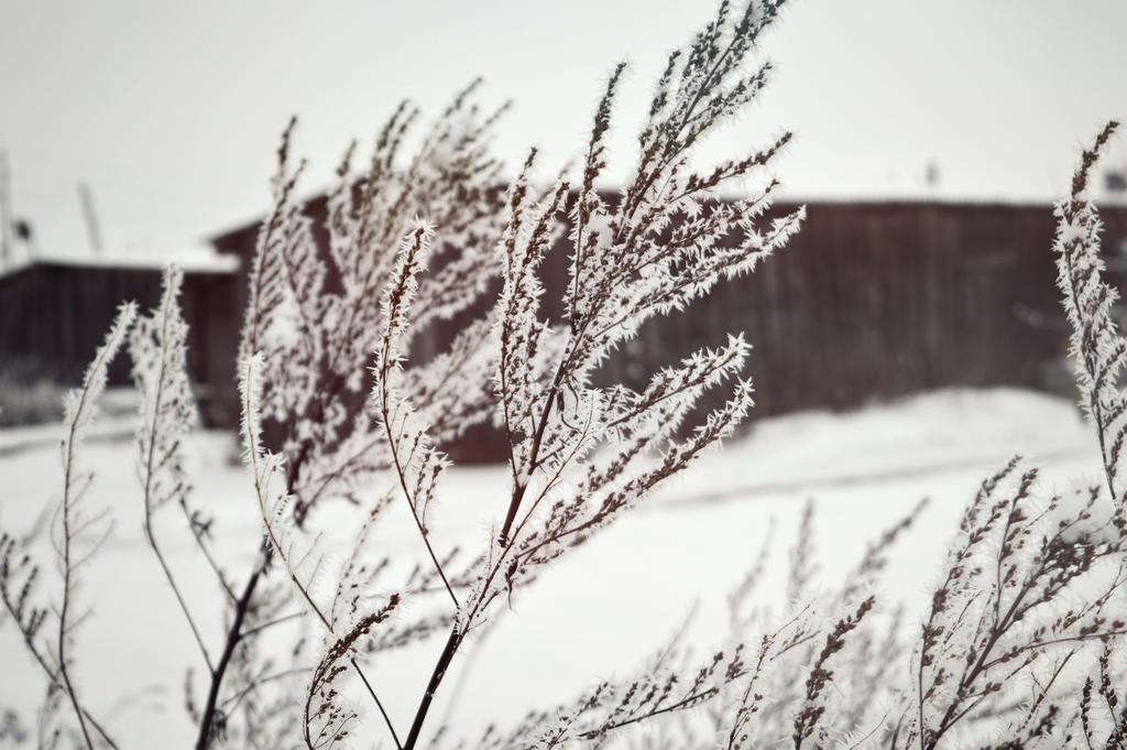 white by daarka7