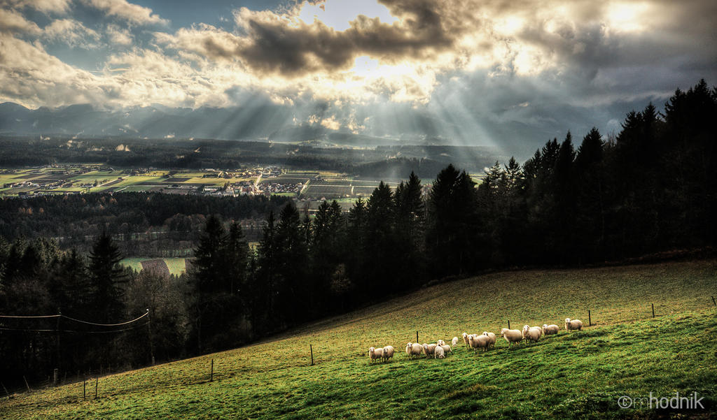 Holy Sheep re-edit by mprox