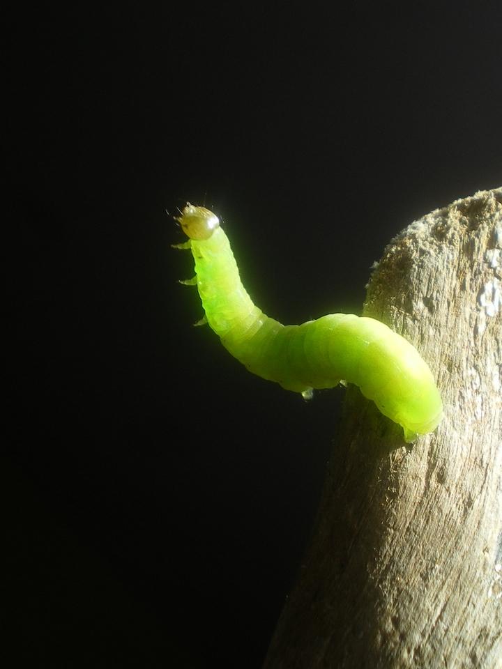 little caterpillar by Lott-photo