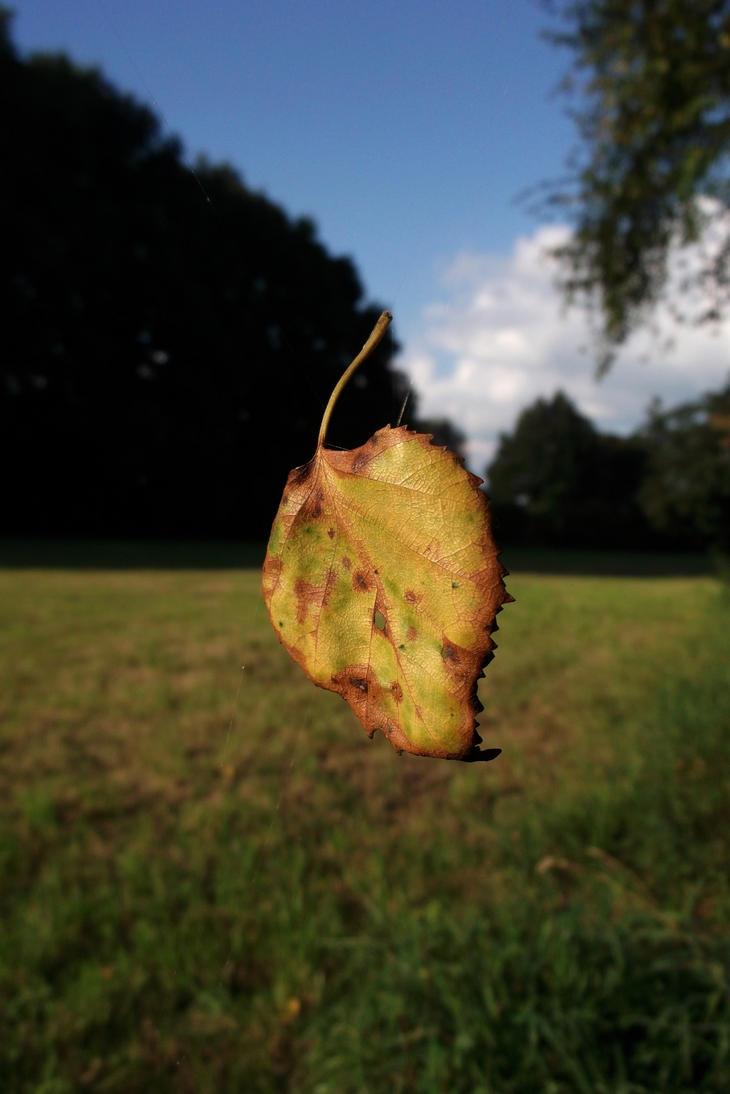 leaf me alone... by Lott-photo