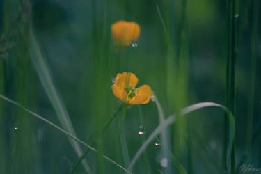 buttercup by Eerieseelie
