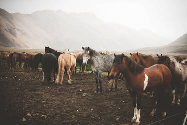 When the Mordor meets Candyland - Horses by Sc0orp