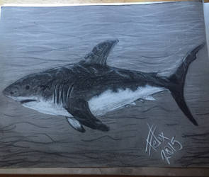 Great white sketch
